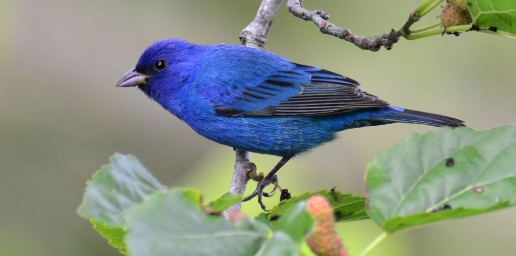 blue birds in michigan campgrounds